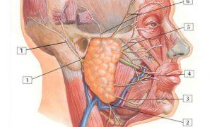 Triệu chứng ung thư tuyến nước bọt