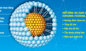 """Kết quả thực nghiệm chứng minh """"Hợp chất Fucoidan"""" có tác dụng hỗ trợ điều trị căn bệnh ung thư"""